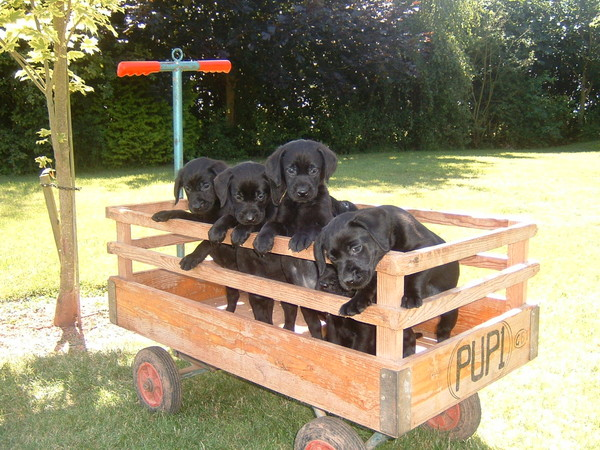 des chiens vraiment mimi