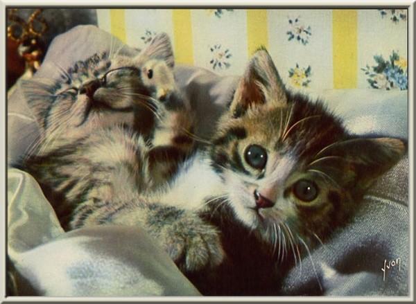 des petits chats super mimi