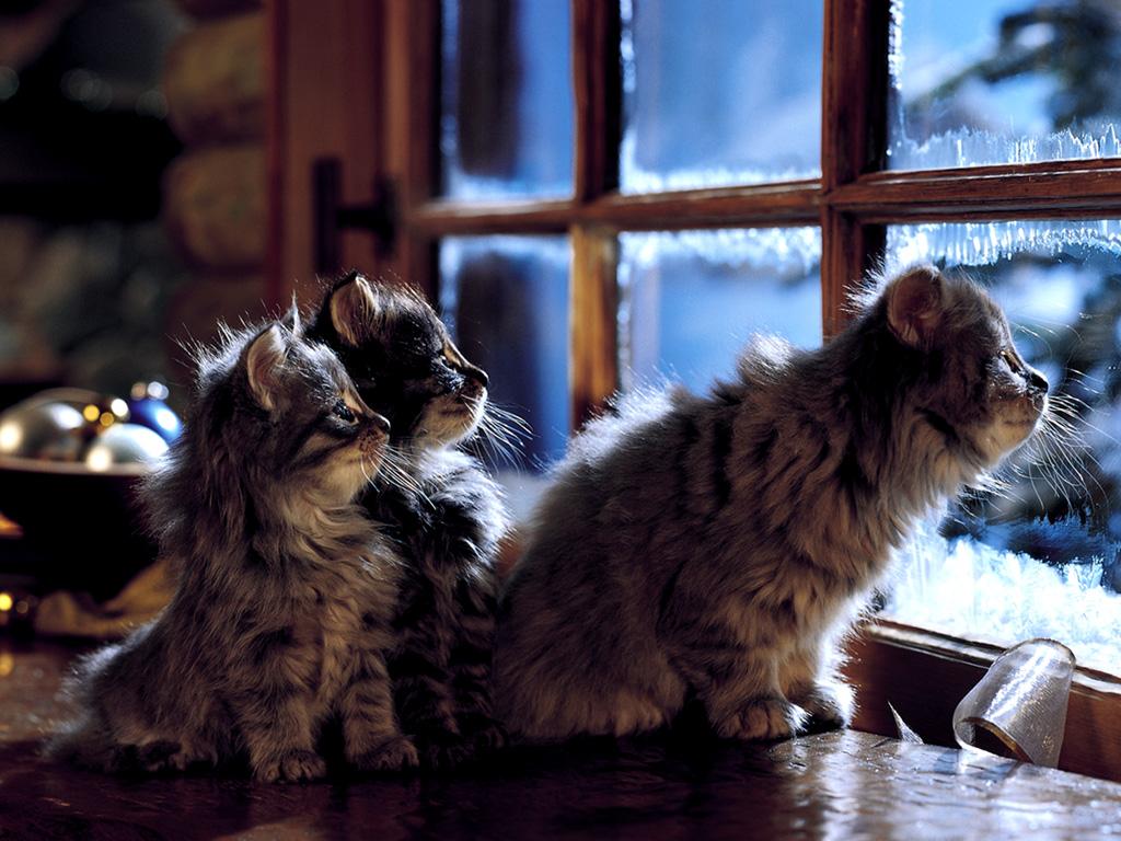 des chats adorables