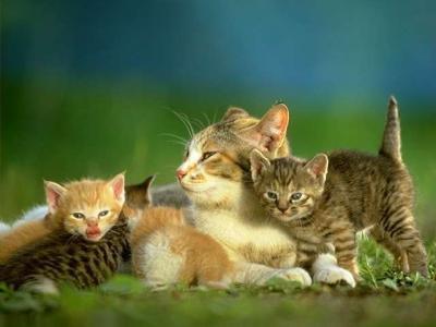 allez un peu de chats