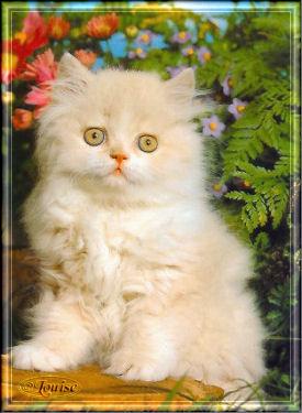 de beaux chats